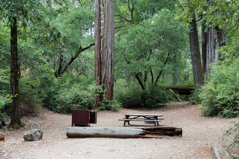 Blooms Creek Campground, Big Basin Redwoods State Park, CA