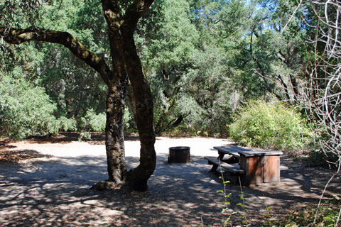 Campground at Henry Cowell Redwoods State Park, CA