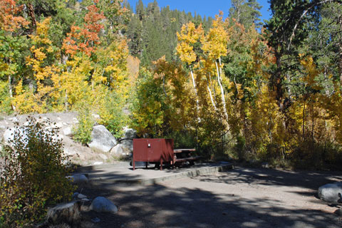Pine Grove Campground,  Inyo National Forest, CA
