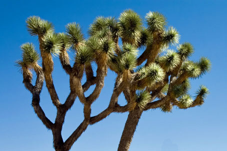 Joshua Tree,  Southern California campgrounds
