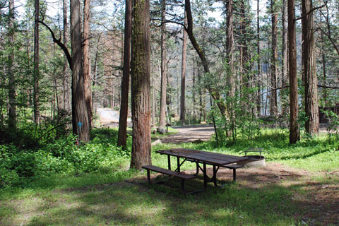 Spring Cove Campground, Bass Lake, Sierra National Forest, CA