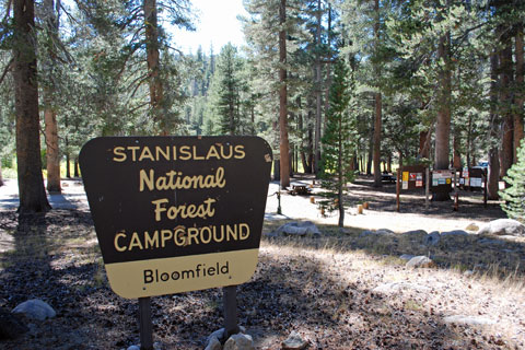Bloomfield Campground near Ebbetts Pass, CA