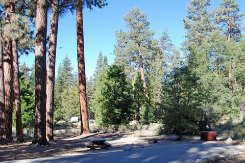 Barton Flats Campground, San Bernardino National Forest, CA