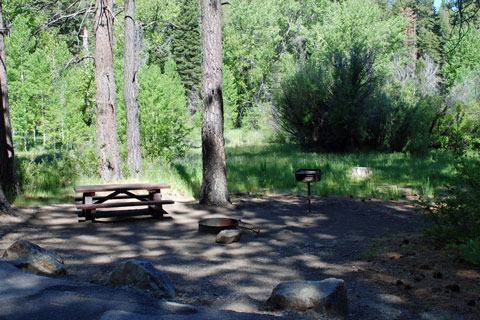 Cold Creek Campground, Highway 89,  Tahoe National Forest