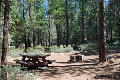 Cottonwood Campground, Highway 89,  Tahoe National Forest