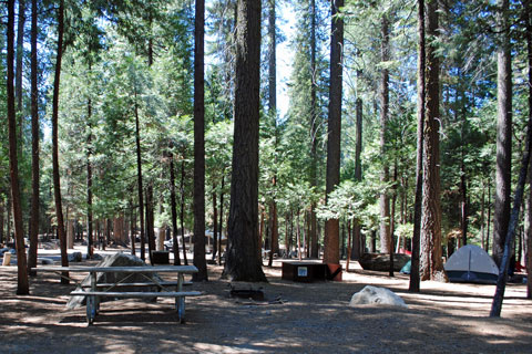 Hodgdon Meadow Campground, Yosemite National Park