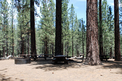 Cottonwood Springs Group Campground, Frenchman Lake, Plumas National Forest