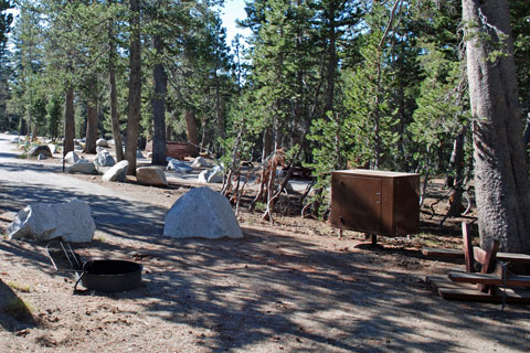 Middle Creek Expansion Campground near Blue Lakes, Humboldt-Toiyabe National Forest, CA