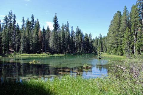 Pond at Silver Lake Campground, Eldorado National Forest, CA