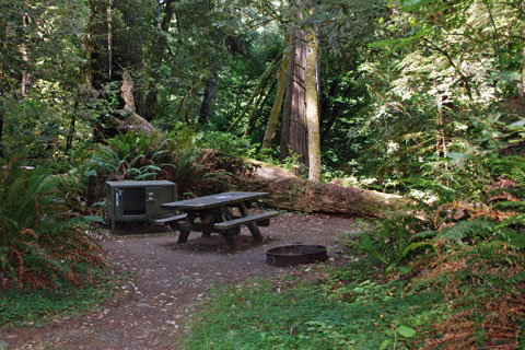 Jedediah Smith Redwoods State Park Hike and Bike campsite
