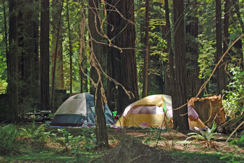 Williams Grove Group Campground, Humboldt Redwoods State Park, CA