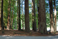 redwood empire,  Northern California campgrounds